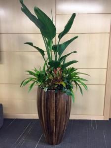 abaca_planter